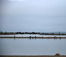 Lagunas de Villafafila